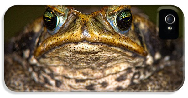 Cane Toad Rhinella Marina, Pantanal IPhone 5 Case by Panoramic Images
