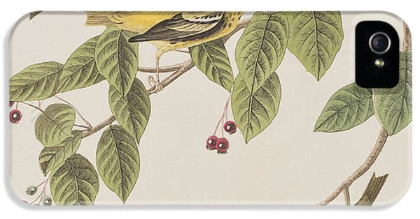 Carbonated Warbler IPhone 5 Case