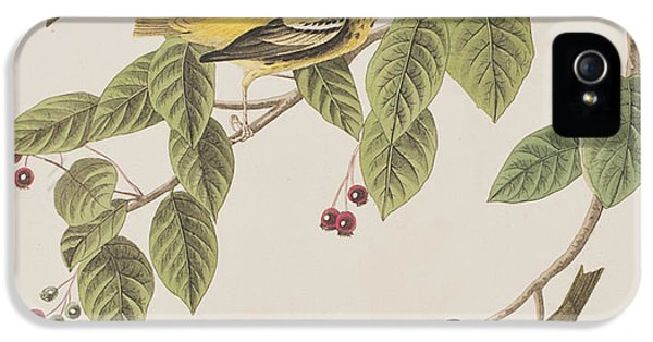 Carbonated Warbler IPhone 5 Case by John James Audubon