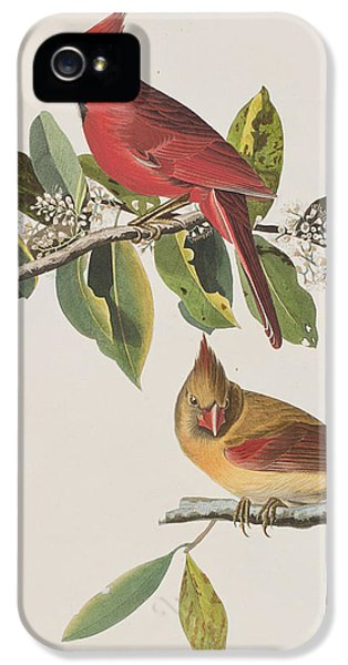 Cardinal Grosbeak IPhone 5 Case by John James Audubon