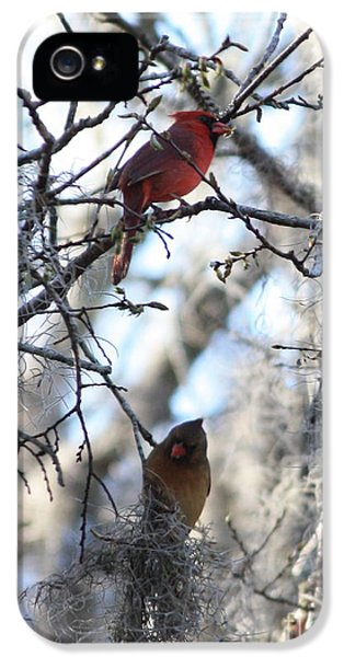 Lovebird iPhone 5 Case - Cardinals In Mossy Tree by Carol Groenen