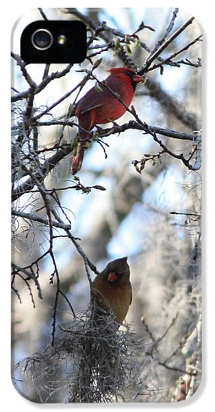 Cardinals In Mossy Tree IPhone 5 Case