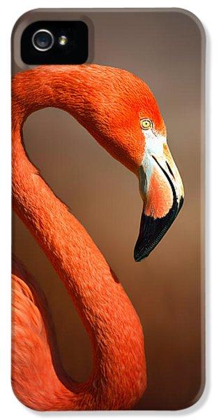 Flamingo iPhone 5 Case - Caribean Flamingo Portrait by Johan Swanepoel