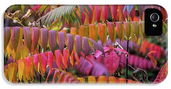 IPhone 5 Case featuring the photograph Carnival Of Autumn Color by Bill Pevlor