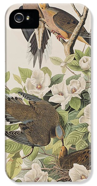 Carolina Turtle Dove IPhone 5 Case by John James Audubon