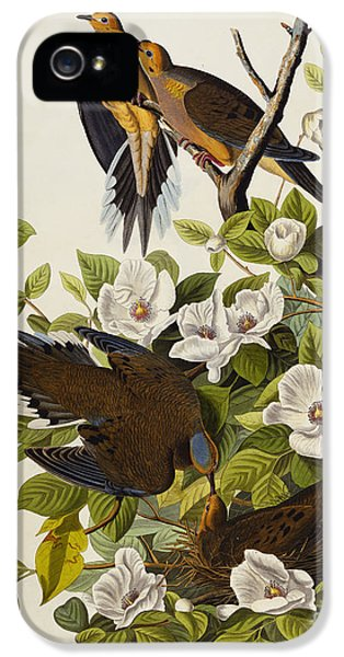 Carolina Turtledove IPhone 5 Case by John James Audubon