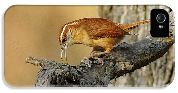 Carolina Wren IPhone 5 Case by Robert Frederick