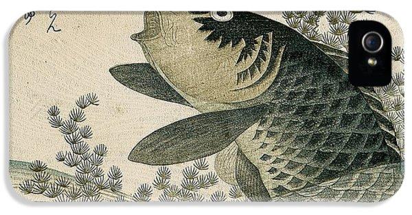 Carp Among Pond Plants IPhone 5 Case by Ryuryukyo Shinsai