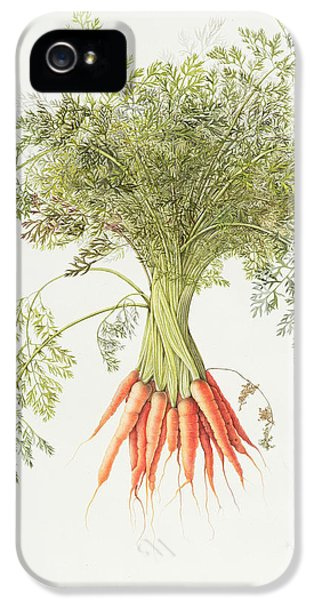 Carrots IPhone 5 Case