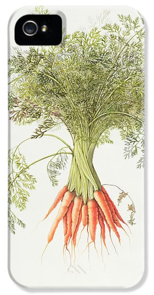 Carrots IPhone 5 Case by Margaret Ann Eden