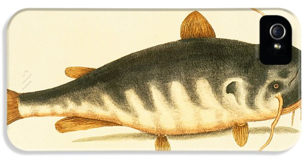Catfish iPhone 5 Case - Catfish by Mark Catesby