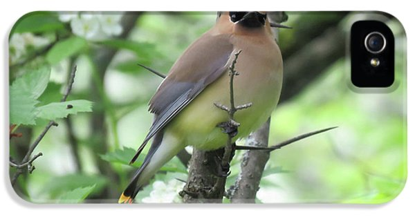 Cedar Wax Wing IPhone 5 Case