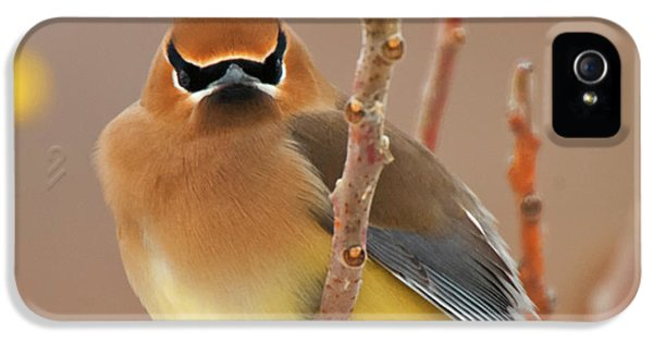 Cedar Wax Wing IPhone 5 / 5s Case by Carl Shaw