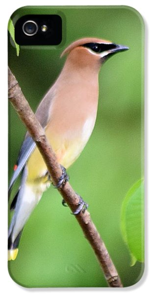 Cedar Wax Wing Profile IPhone 5 / 5s Case by Sheri McLeroy