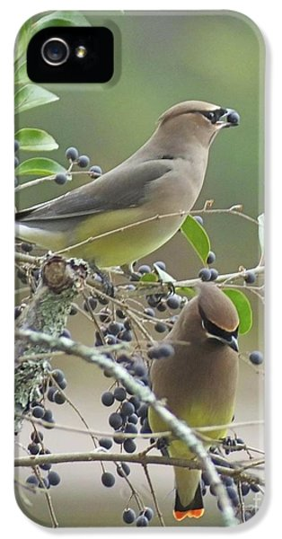 Cedar Wax Wings IPhone 5 Case