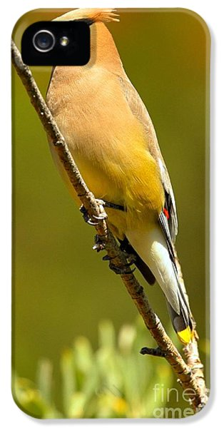 Cedar Waxwing IPhone 5 / 5s Case by Adam Jewell
