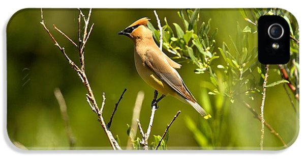 Cedar Waxwing At Glacier IPhone 5 Case