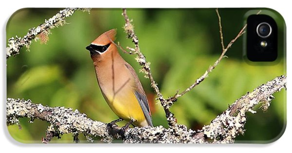 Cedar Waxwing  IPhone 5 Case