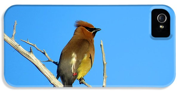 Cedar Waxwing IPhone 5 / 5s Case by Dianne Cowen