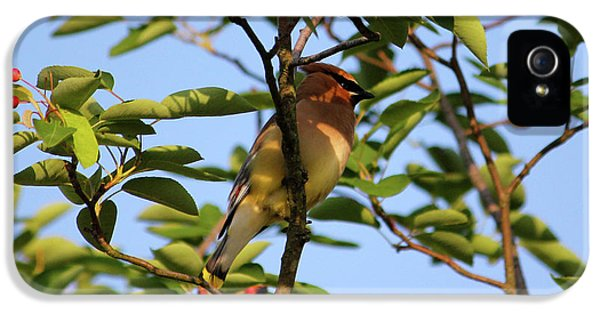 Cedar Waxwing IPhone 5 Case by Mark A Brown