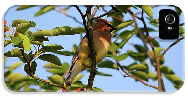 Cedar Waxwing IPhone 5 / 5s Case by Mark A Brown