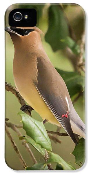 Cedar Waxing iPhone 5 Case - Cedar Waxwing Portrait by Terry DeLuco