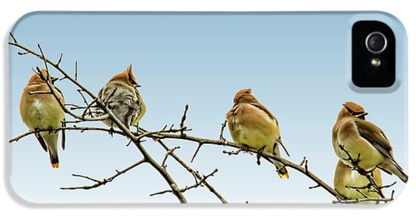 Cedar Waxwings IPhone 5 Case