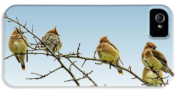 Cedar Waxwings IPhone 5 / 5s Case by Geraldine Scull