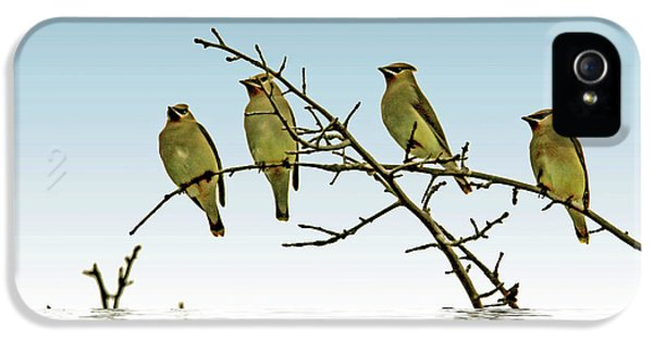 Cedar Waxwings On A Branch IPhone 5 Case