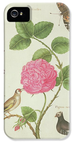 Centifolia Rose, Lavender, Tortoiseshell Butterfly, Goldfinch And Crested Pigeon IPhone 5 Case