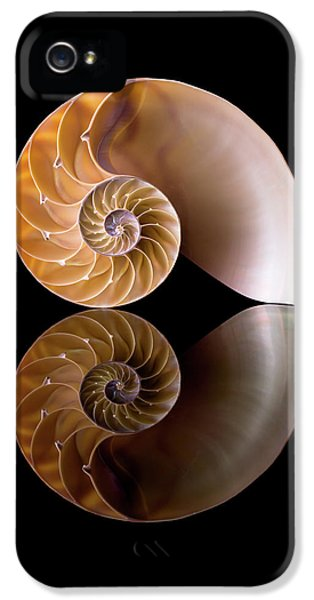 Chambered Nautilus IPhone 5 Case by Jim Hughes