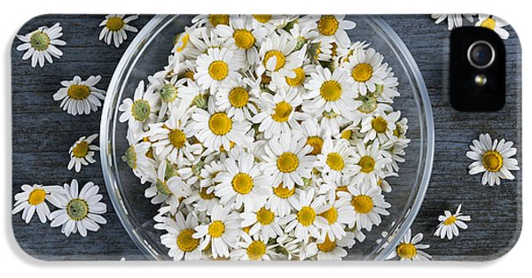 Chamomile Flowers In Bowl IPhone 5 Case