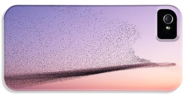 Starlings iPhone 5 Case - Chaos In Motion - Starling Murmuration by Roeselien Raimond