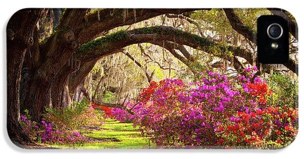 Charleston Sc Magnolia Plantation Gardens - Memory Lane IPhone 5 Case