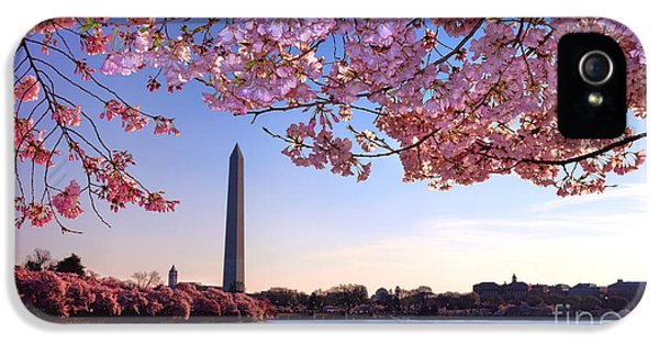 Washington D.c iPhone 5 Case - Cheery Cherry Dc by Olivier Le Queinec