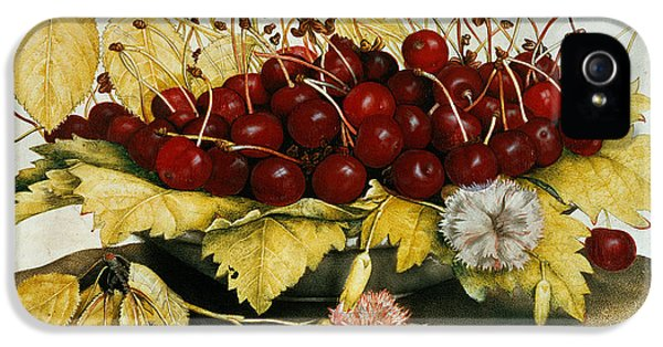 Cherries And Carnations IPhone 5 Case by Giovanna Garzoni