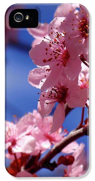 Cherry Blossom IPhone 5 Case
