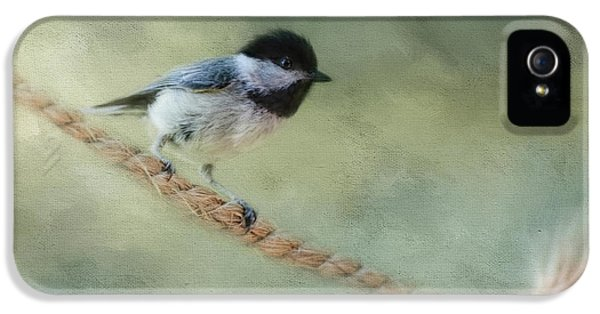 Chickadee At The Shore IPhone 5 Case