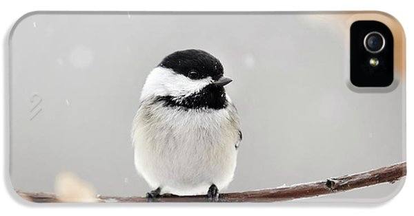 IPhone 5 Case featuring the photograph Chickadee Bird In Snow by Christina Rollo