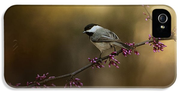 Chickadee In The Golden Light IPhone 5 / 5s Case by Jai Johnson