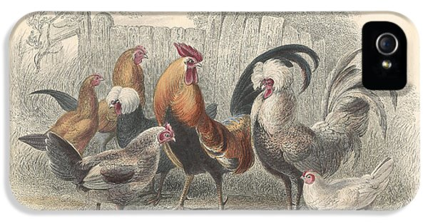 Chickens IPhone 5 Case by Rob Dreyer