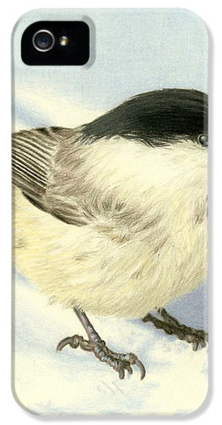Chilly Chickadee IPhone 5 / 5s Case by Sarah Batalka
