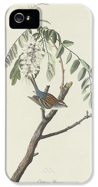 Chipping Sparrow IPhone 5 Case by Rob Dreyer
