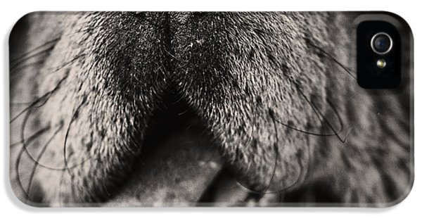 Wool iPhone 5 Cases - Chow Chow  iPhone 5 Case by Stylianos Kleanthous
