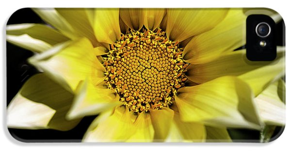 IPhone 5 Case featuring the photograph Chrysanthos by Linda Lees