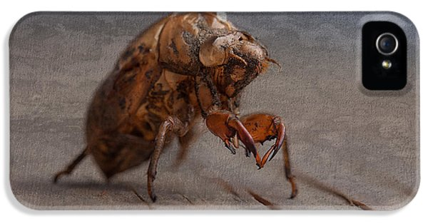 Insect iPhone 5 Case - Cicada Shell by Tom Mc Nemar