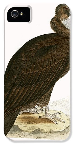Cinereous Vulture IPhone 5 Case by English School
