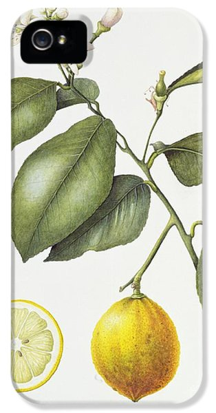 Citrus Bergamot IPhone 5 Case by Margaret Ann Eden