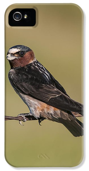 IPhone 5 Case featuring the photograph Cliff Swallow by Gary Lengyel