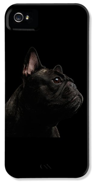 Dog iPhone 5 Case - Close-up French Bulldog Dog Like Monster In Profile View Isolated by Sergey Taran
